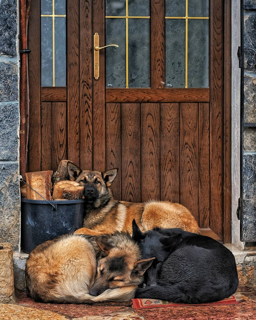 Fro nivel perros en vidrieros instadog friends frio montaapalentina palenciahellip